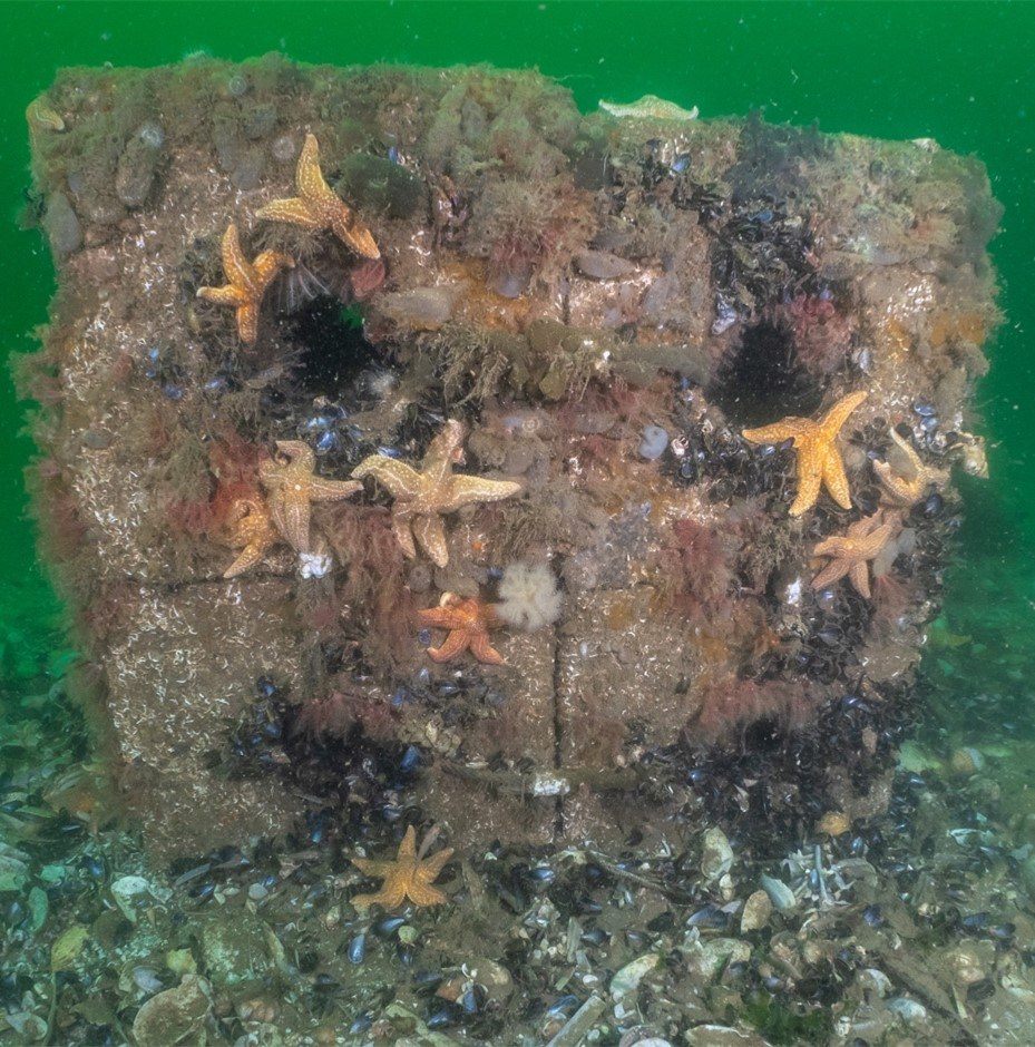 A Reef Cube in use