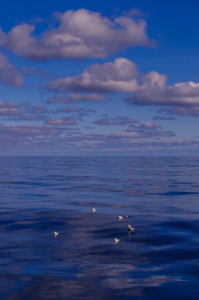 Expeditie Noordzee OCEANA Juan C Uetos 1